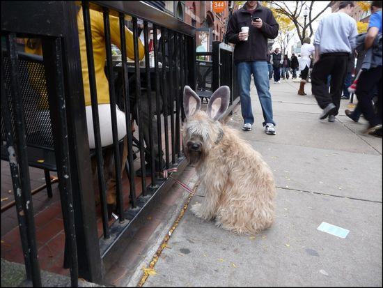 Bunny-dog