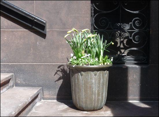Planter-FairfieldSt
