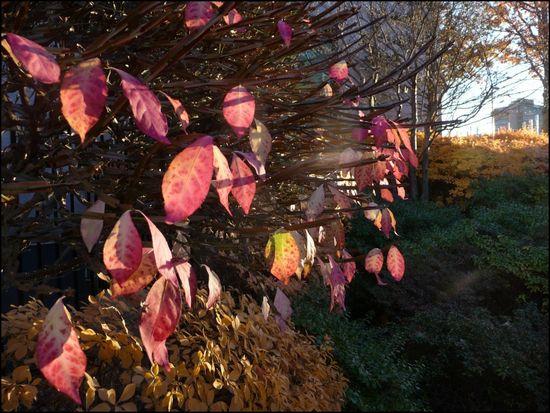 MFA-leaves