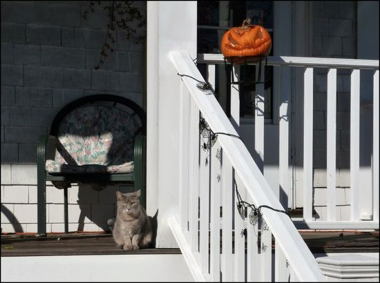 Porch-with-kitty