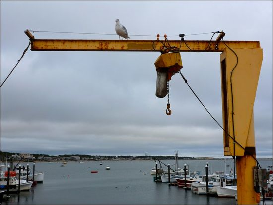 PtownHarbor-crane