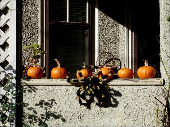 PorchPumpkin-with-spider