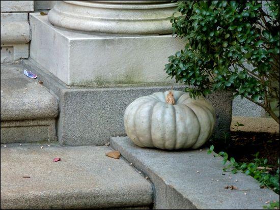 WhitePumpkin