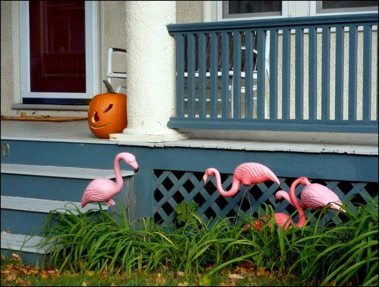 PorchPumpkin-flamingos2