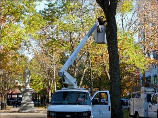 Men-in-Trees1