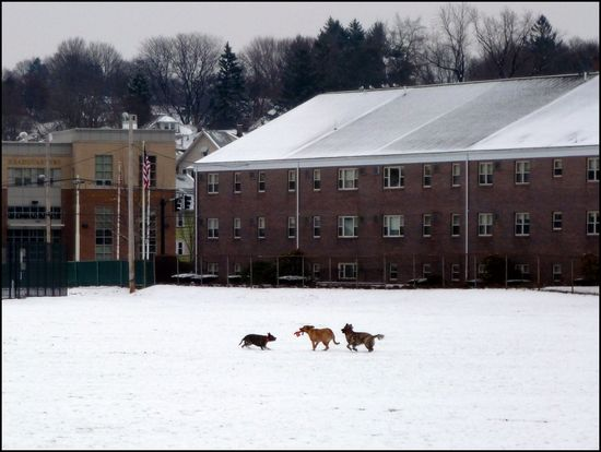 Dogs-playing-snow