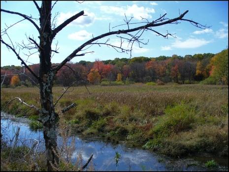 Broad_meadow_brook2