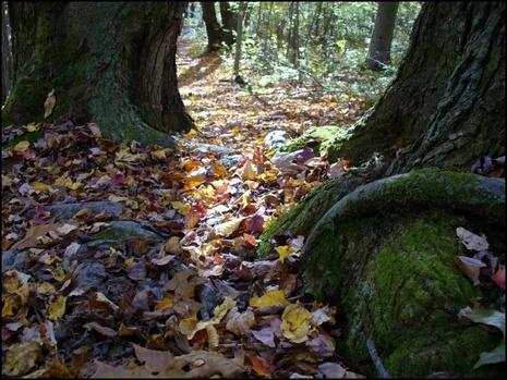Forest_floor